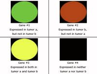 Figure 2a: Tumor A (green) vs. Tumor B (red).