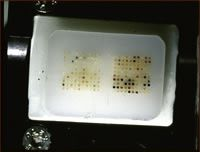 Studies Figure 2: A picture of a tissue microarray paraffin block