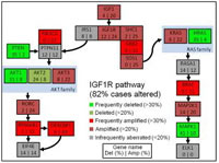 Figure 2a: Genetic aberrations in the IGF1R pathway and IGF1R protein expression.