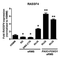 Report Figure 2: RASSF4 expression in RMS cell lines.