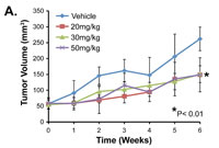Figure 3A: PI-103 as a single agent induces cytostatic but not cytotoxic effects on UPS/MFH growth in vivo