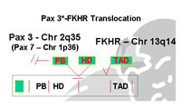 Figure 9: Reciprocal translocation between PAX and FKHR creates a hybrid oncogene.