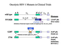 Figure 3: Map of oncolytic HSV vectors in clinical trials.