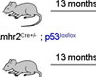 A Preclinical Mouse Model for Uterine Leiomyosarcoma